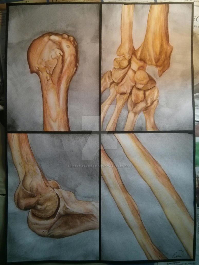 Bones of the Upper Limb by Heart-Palpitations