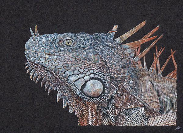 Iguana by Muntchka