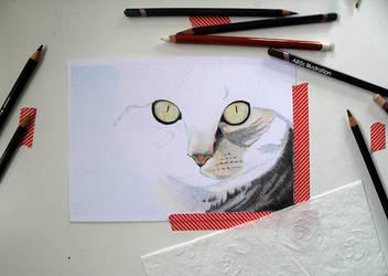WIP - Cat (A5) by Muntchka