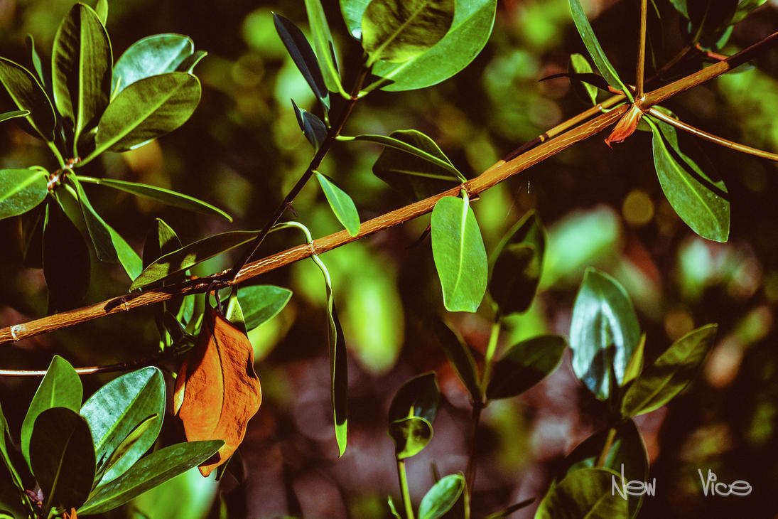 Sea of Green by NewVicePhotography