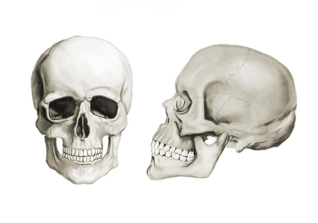 Skull by Rojorana