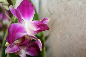 Flower ..