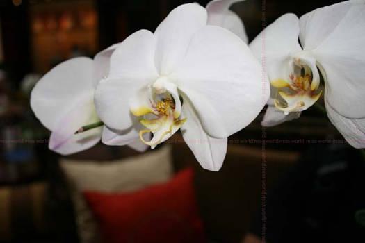 White Flowers ..