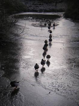 Ducks Of War