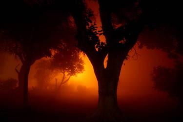 Deadman's forest