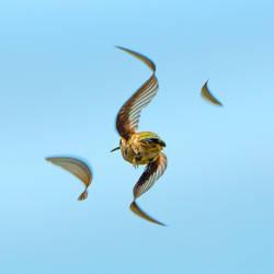 Hummingbird Abstract
