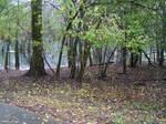 Fall Morning Pond2