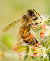Hot bee