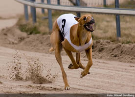 greyhound racing 2 by msun