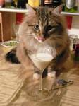 Milktini - Yummy