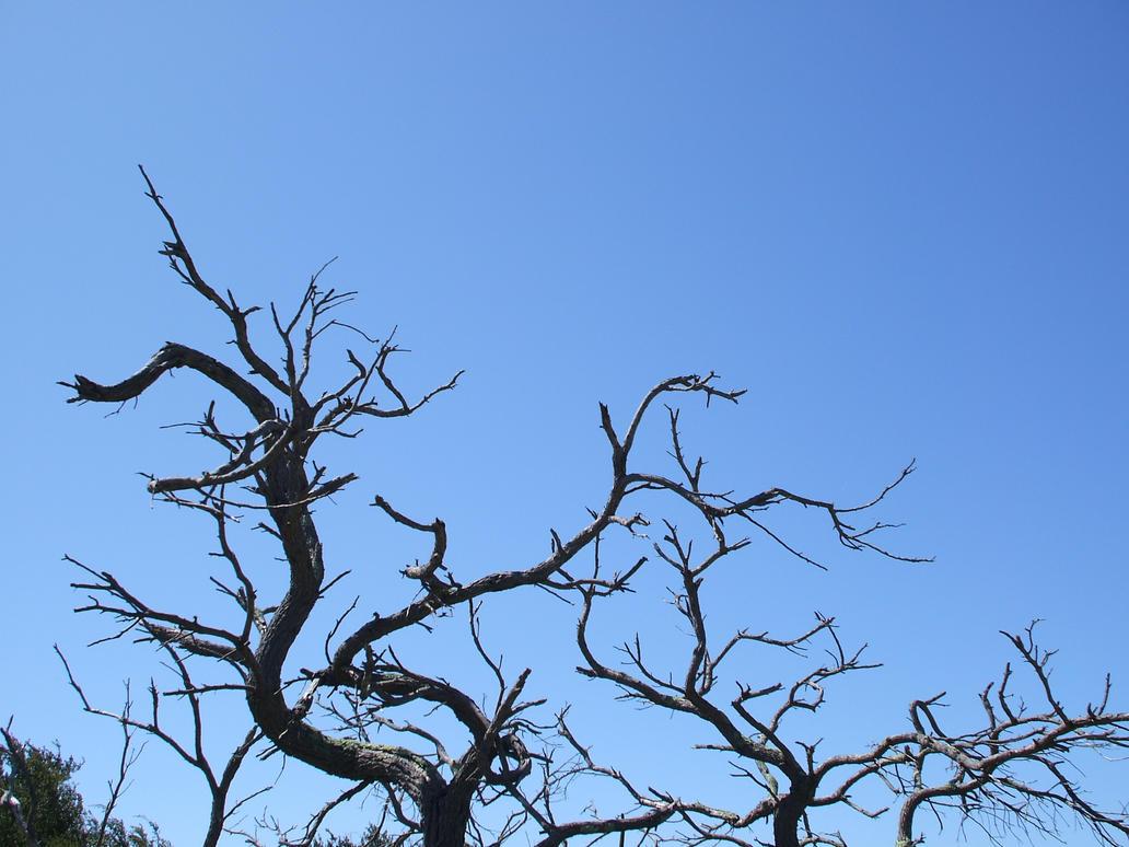 Dead Tree Stock 2. by Jiko-Stock