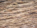 Bark Texture 1.