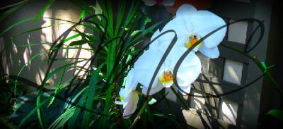 San Diego Garden Flowers by moonpoetry