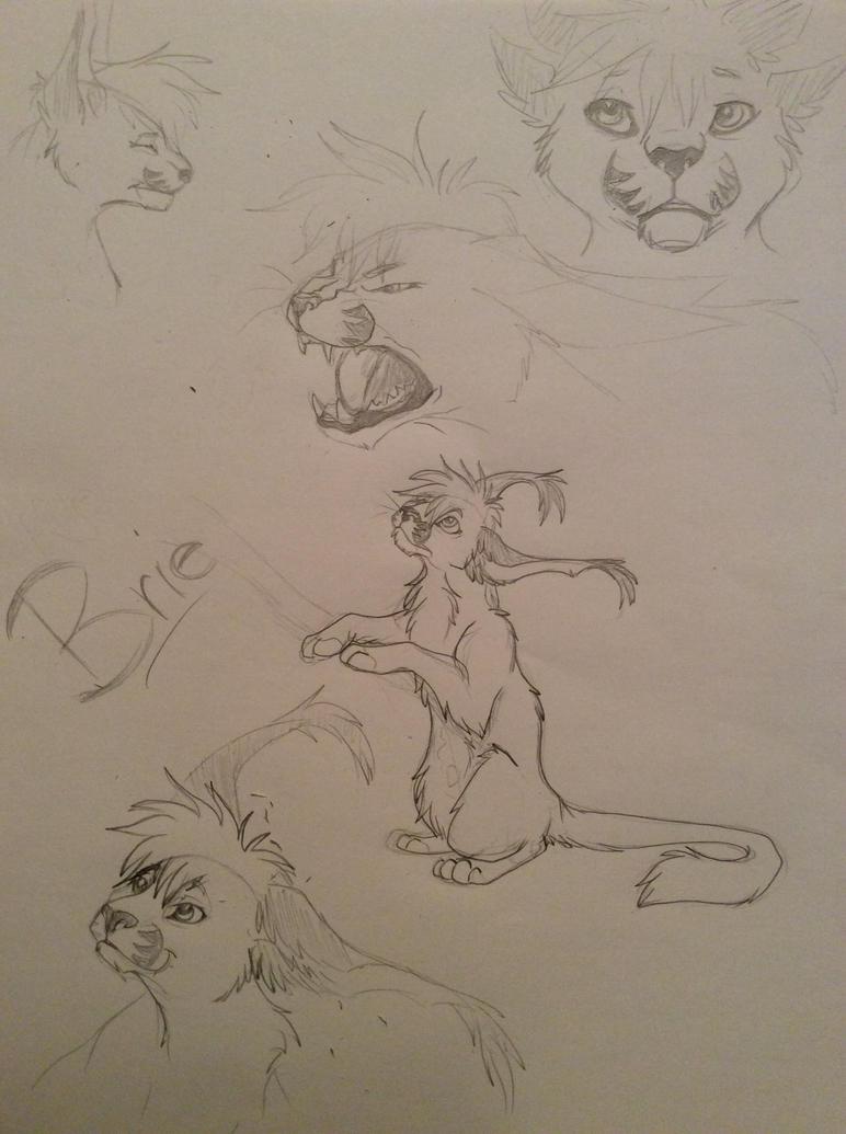 Brie Sketches by tajiba