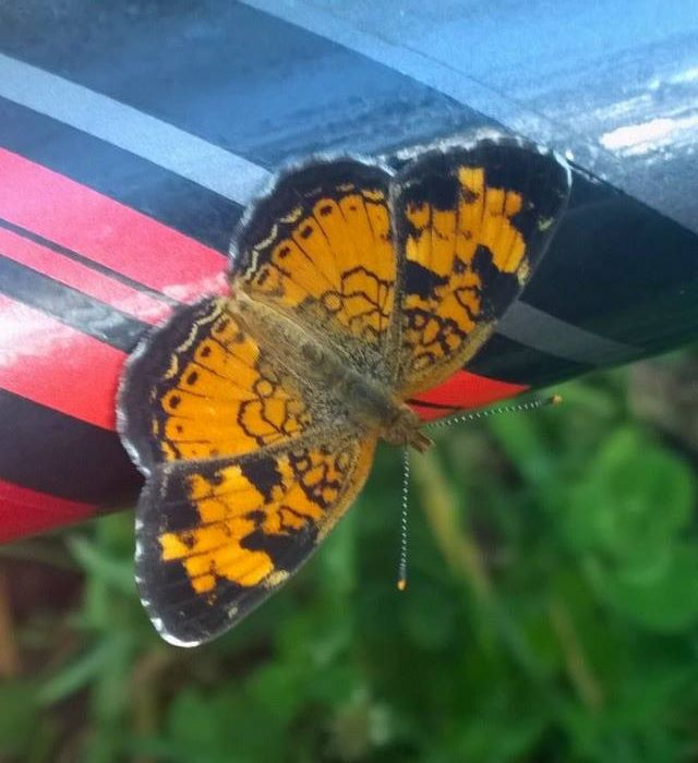 Butterfly on my Bicycle by LadyFenrirUnchained