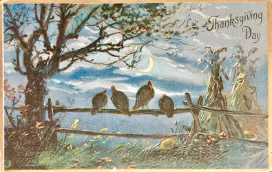 Turkeys by Moonlight