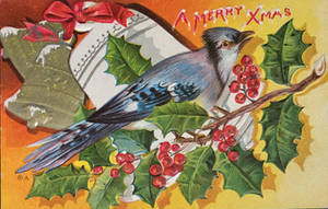 Holiday Blue Jay by Yesterdays-Paper