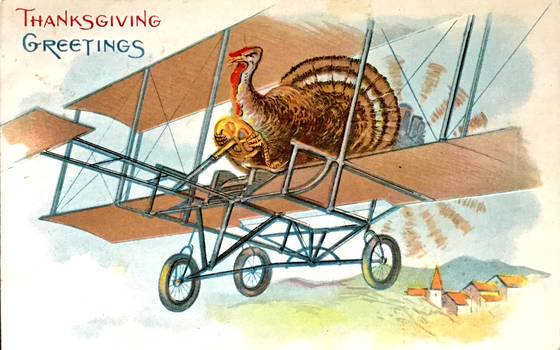 Turkeys DO Fly!