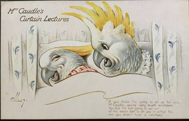 Curtain Lectures - Sulphur Crested Cockatoos by Yesterdays-Paper
