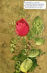 My Fairest Rosebud