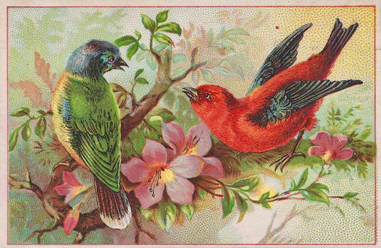 Rainbow Bunting and Scarlet Tanager