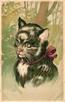 Tuxedo Cat by Yesterdays-Paper
