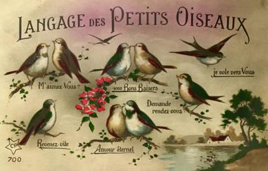Langage Des Petits Oiseaux
