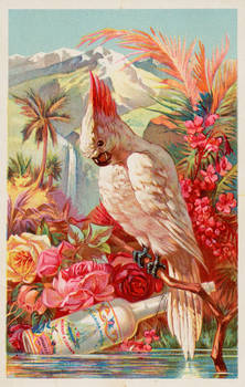 Victorian Advertising - Tropical Beauty