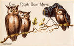 Owl Right Don't Move