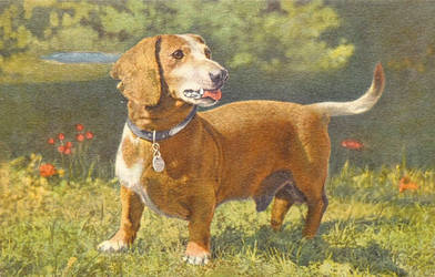 Basschshund by Yesterdays-Paper