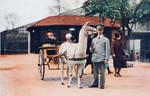 Vintage UK - Llama Wagon at the Zoo