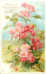 Rosy Ramblers