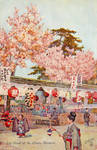 Feast Of the Cherry Blossom