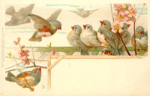 Nine Little Finches by Yesterdays-Paper