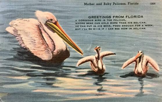 Mother Pelican and Babies