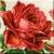 Elegant Rose Icon