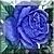 Vintage Blue Rose Icon
