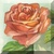Vintage Orange Rose Icon