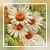 Vintage Daisy Icon