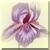 Vintage Purple Iris Icon by Yesterdays-Paper