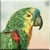 Amazon Parrot Icon - Right
