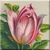Pink Tulip Icon