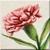 Pink Carnation Icon