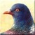 Pigeon Icon - Left by Yesterdays-Paper