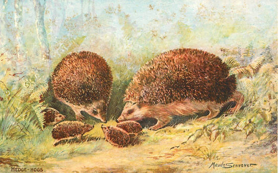 Hedgehog Family In the Woods