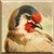 European Goldfinch Icon - Right by Yesterdays-Paper