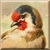 European Goldfinch Icon - Left by Yesterdays-Paper