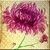 Vintage Chrysanthemum Flower Icon