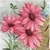 Vintage Pink Daisy Icon