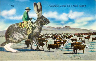 Vintage Montana - Punching Cattle On a Jack Rabbit by Yesterdays-Paper